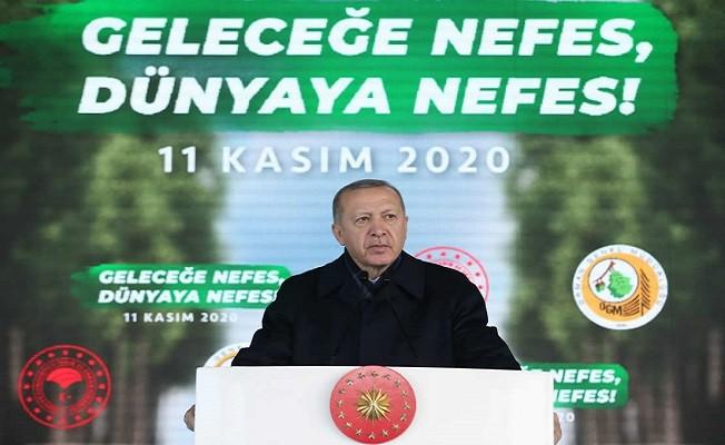 Bizi eleştirenler PKK'nın yaktığı ormanlardan bahsetmiyor