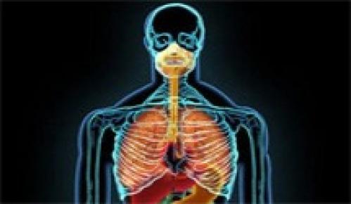 İnsan Vücuduna Dair İnanılmaz 15 Özellik