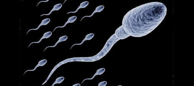 Sperm sayısı 15 milyona düştü